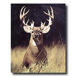 http://www.amazon.com/Trophy-Buck-Picture-Art-Print/dp/B003ZKGZ9W