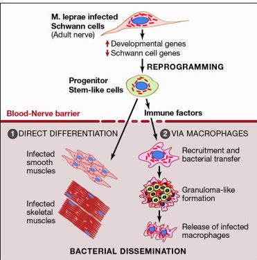 http://www.sciencedirect.com/science/article/pii/S0092867412015012